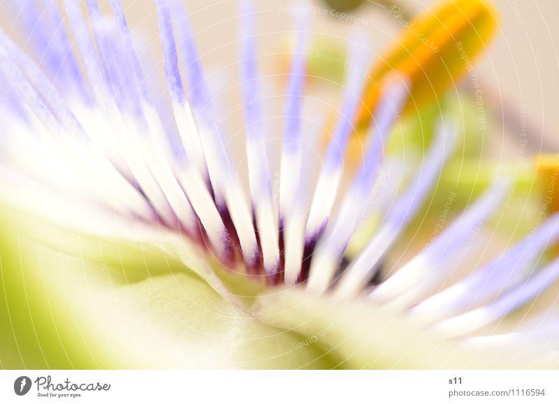 Nature Blue Plant Beautiful Green White Summer Yellow Blossom Natural Garden Illuminate Esthetic Blossoming Kitsch Thin