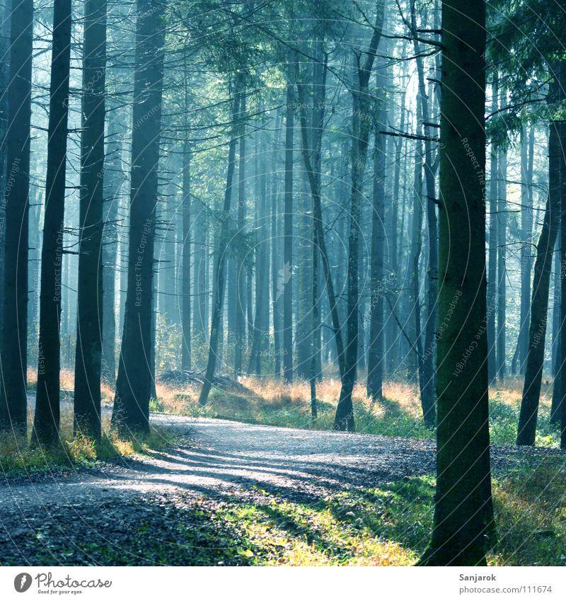 Nature Blue Tree Sun Joy Leaf Forest Yellow Autumn Spring Lanes & trails Garden Air Park Earth Fog