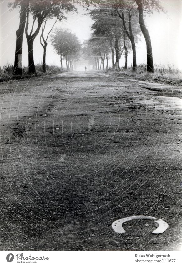 Tree Sadness Street Horizon Fog Hiking Horse Asphalt Deep Wanderlust Traffic infrastructure Nostalgia Goodbye Avenue Dramatic Country road