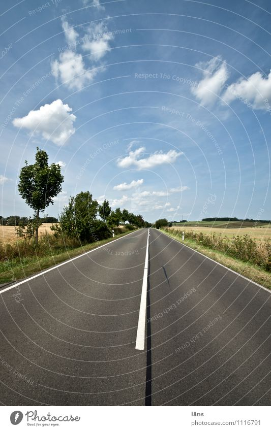 straight ahead Landscape Sky Clouds Summer Beautiful weather Tree Field Transport Traffic infrastructure Street Lanes & trails Line Success Infinity Discover