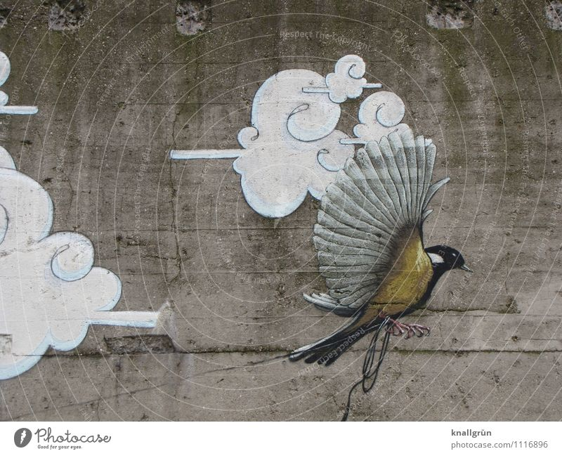 City White Clouds Animal Black Wall (building) Graffiti Emotions Wall (barrier) Gray Flying Moody Bird Facade Dirty Wing