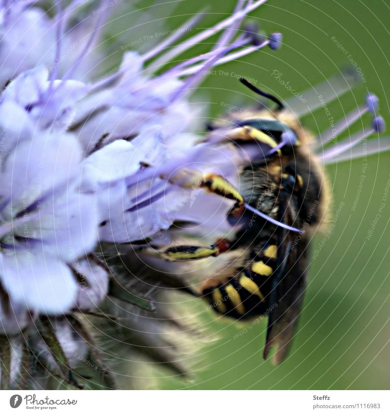 having a snack Nature Plant Animal Summer Flower Blossom Wild plant Nectar plant Summerflower Wasps Insect To feed Delicious Near Green Violet Foraging Summery
