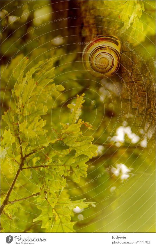 **Lucky *** Colour photo Exterior shot Animal portrait Joy Happy Life Harmonious Contentment Summer Autumn Snail Green Oak tree Day