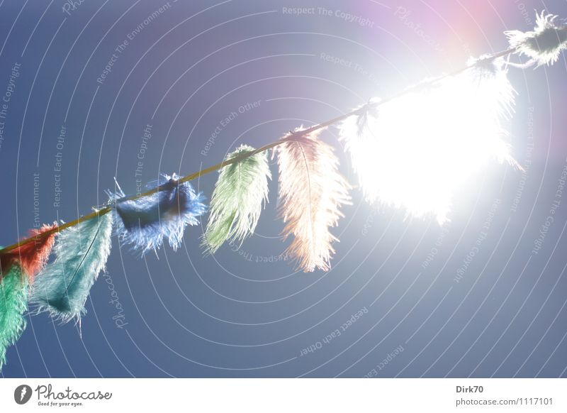 Sky Summer Sun Joy Warmth Natural Feasts & Celebrations Bright Party Illuminate Decoration Birthday Feather Happiness Crazy Joie de vivre (Vitality)