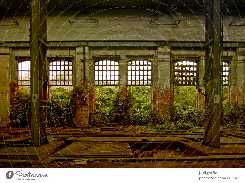 industrial romance Window Growth Empty Light Factory Derelict Broken Dismantling Industry Colour Construction site Room Warehouse Column plant proliferate