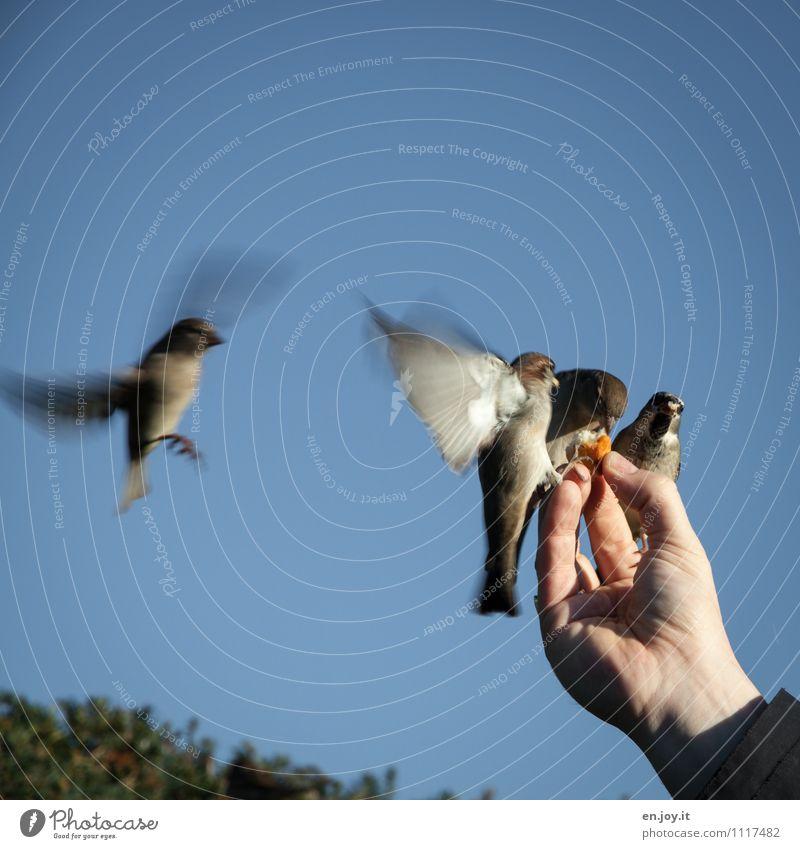 Nature Hand Animal Life Happy Exceptional Flying Bird Idyll Wild animal Happiness Joie de vivre (Vitality) Beautiful weather Hope Belief Trust