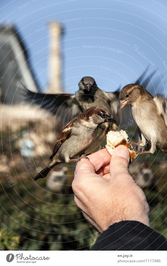 Hand Animal Life Exceptional Flying Bird Park Wild animal Beautiful weather Trust Cloudless sky To feed Roll Feeding Crouch Sparrow