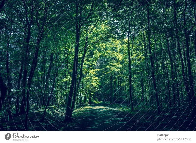 Forest clearing Nature Plant Green Summer Sun Tree Leaf Landscape Dark Environment Spring Natural Lanes & trails Park Growth