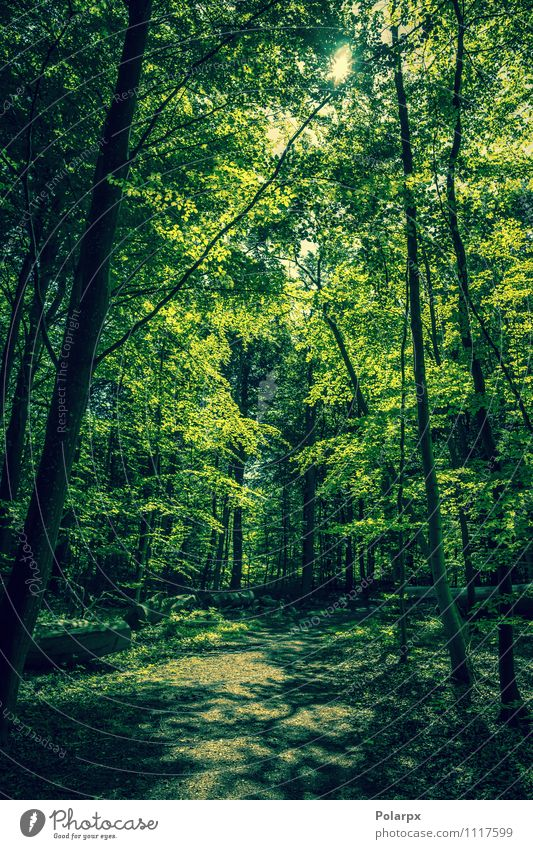 Green forest Nature Plant Beautiful Summer Sun Tree Leaf Landscape Dark Forest Environment Spring Natural Lanes & trails Park