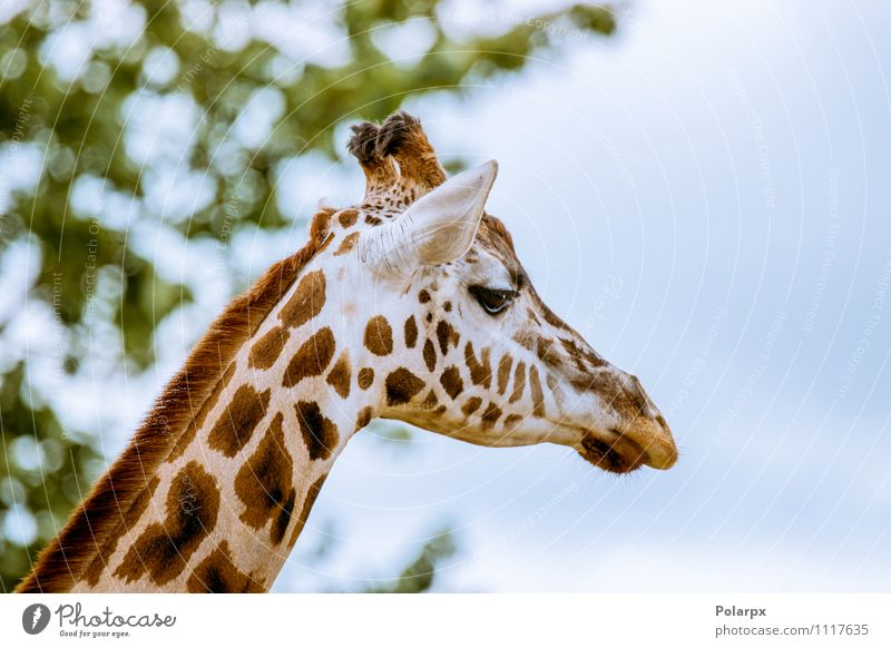 Giraffe head Sky Nature Blue Colour Summer Tree Loneliness Landscape Animal Forest Environment Grass Natural Park Wild Body
