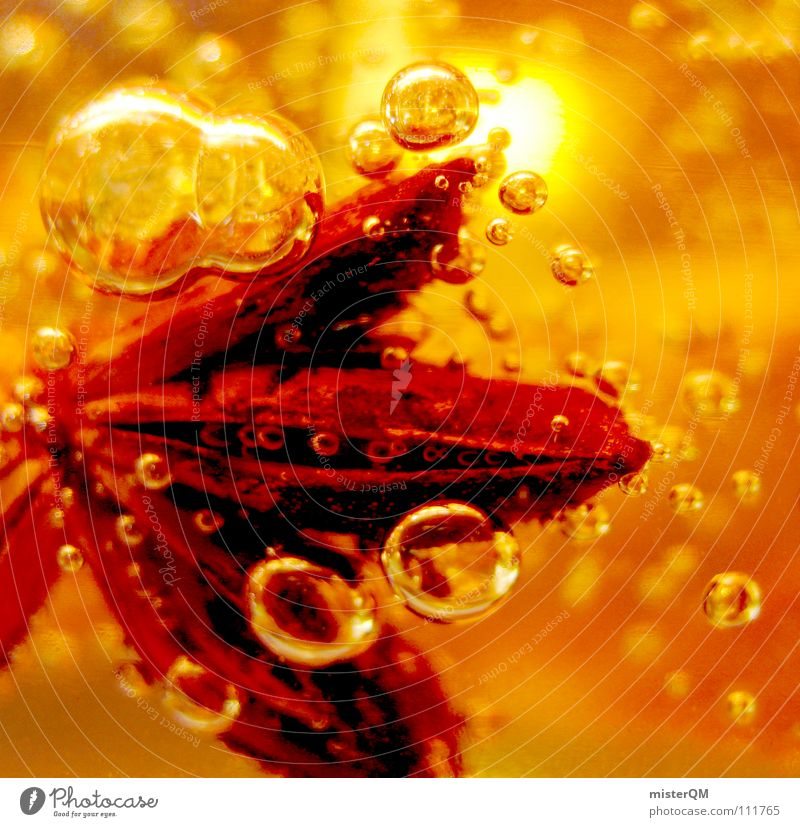 Red Christmas & Advent Orange Star (Symbol) Herbs and spices Air bubble Partially visible Section of image Christmas decoration Christmas star Amber coloured