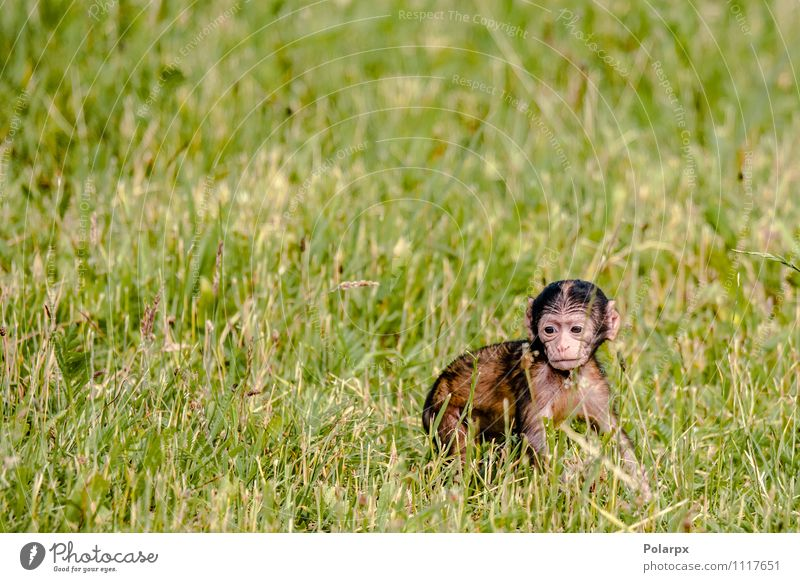 Baby monkey Child Nature Man Tree Loneliness Animal Face Adults Eating Grass Funny Brown Wild Hair Sit Baby