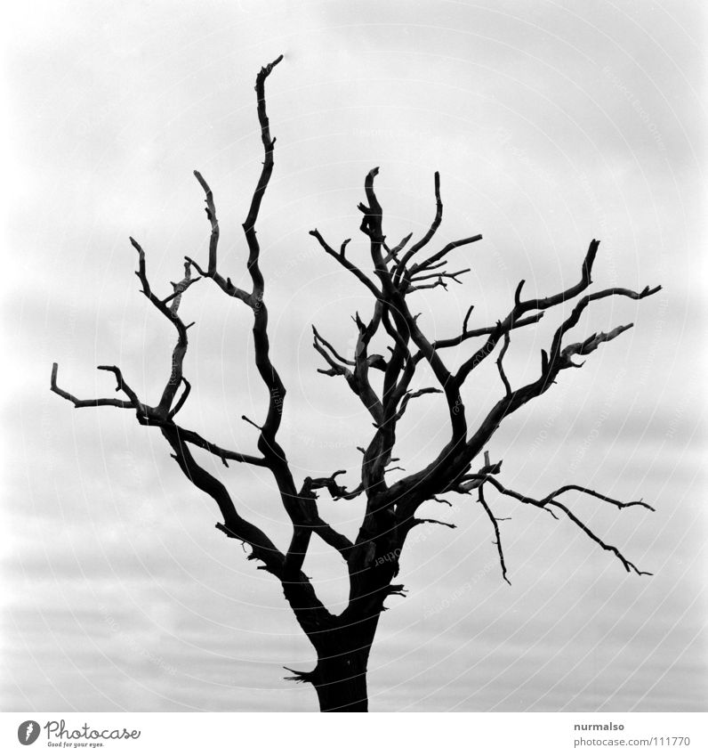 Tree Winter Dark Autumn Death Moody Earth Fear Branch Deep Evil Ghosts & Spectres  Panic Edge Hatred Eerie