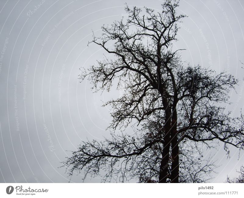 Sky Tree Winter Dark Cold Autumn Branch Tree bark
