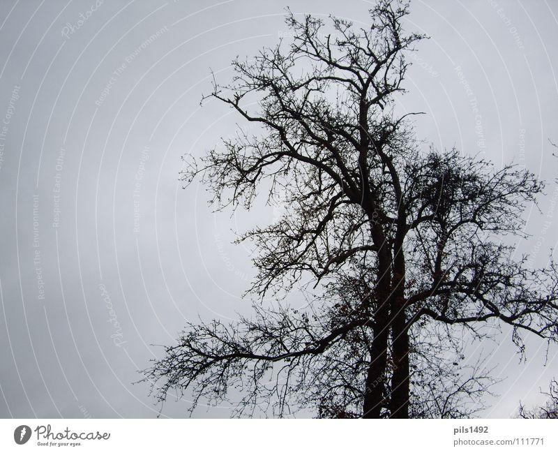 Tree,bare,autumnal Autumn Tree bark Winter Cold Dark Branch Sky