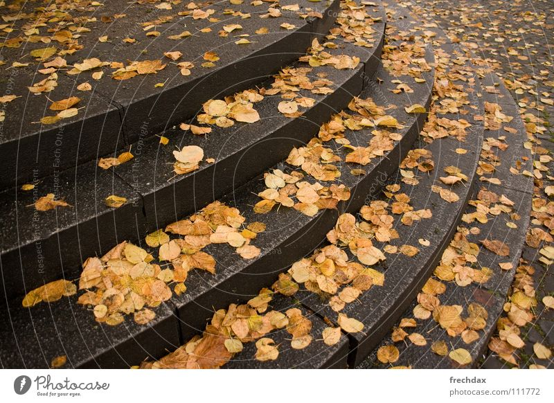 Water Green Leaf Clouds Yellow Street Cold Autumn Stone Rain Line Brown Wet Concrete