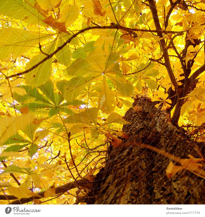 Leaf Yellow Lamp Autumn Gold End To fall Transience Seasons Tree trunk Goodbye Treetop Holiday season October Chestnut tree