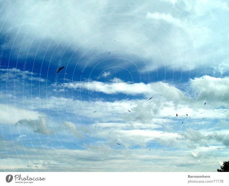 Sky Clouds Freedom Bird Flying Transport Switzerland