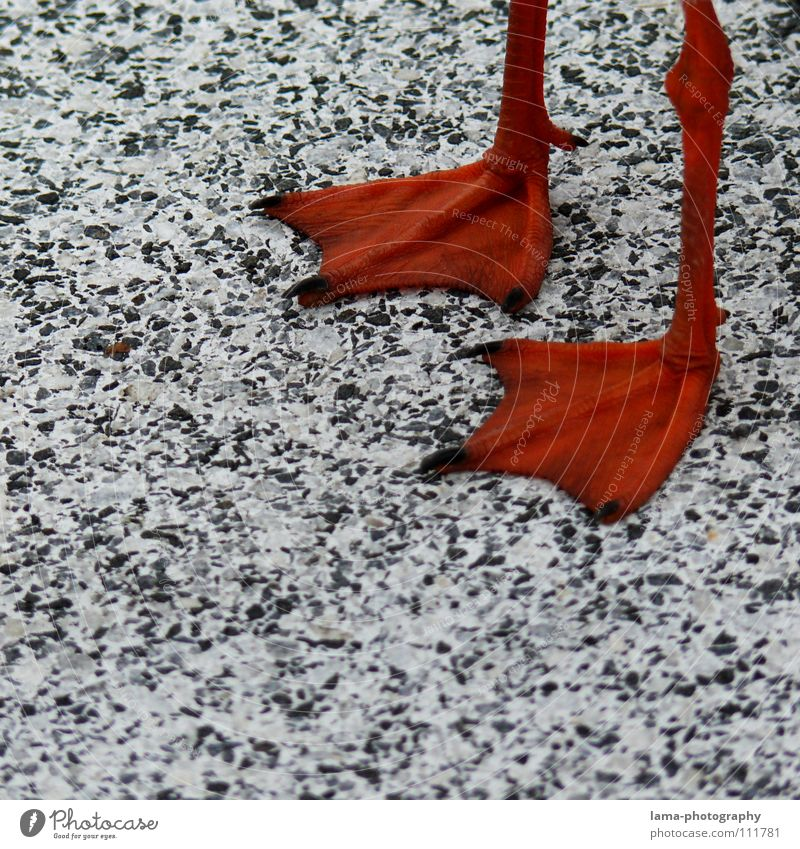 Red Animal Colour Snow Stone Legs Bird Orange Footwear Going Wait Walking Concrete Animal foot Stand Floor covering
