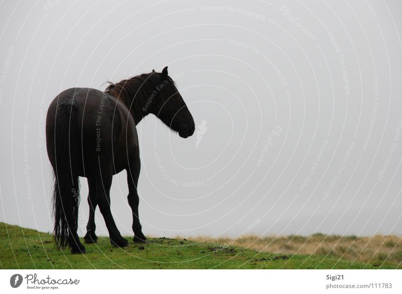 View into the Dartmoor Mane Horse Tails Animal Meadow Graceful Dark Posture Beautiful Stand Tasty Mammal Landscape Perspective Looking Elegant Wait Esthetic