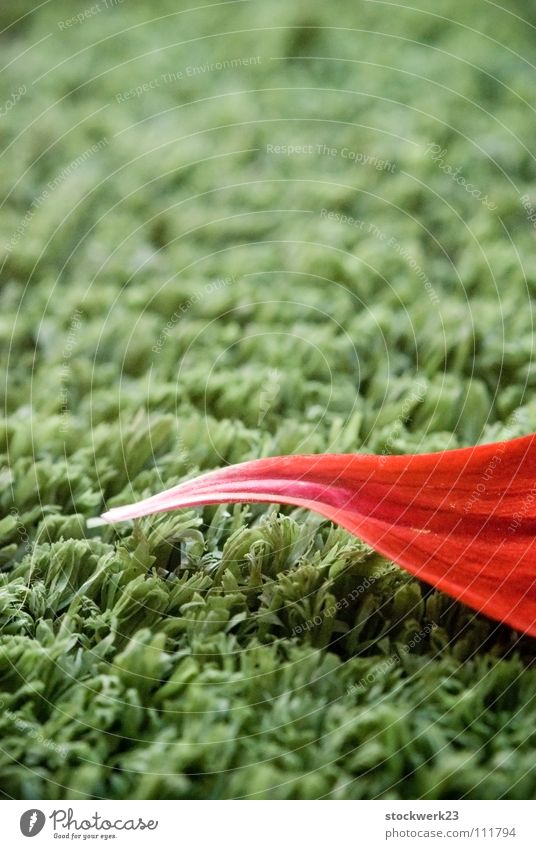 Nature Green Red Summer Leaf Grass Lawn Point Artificial lawn