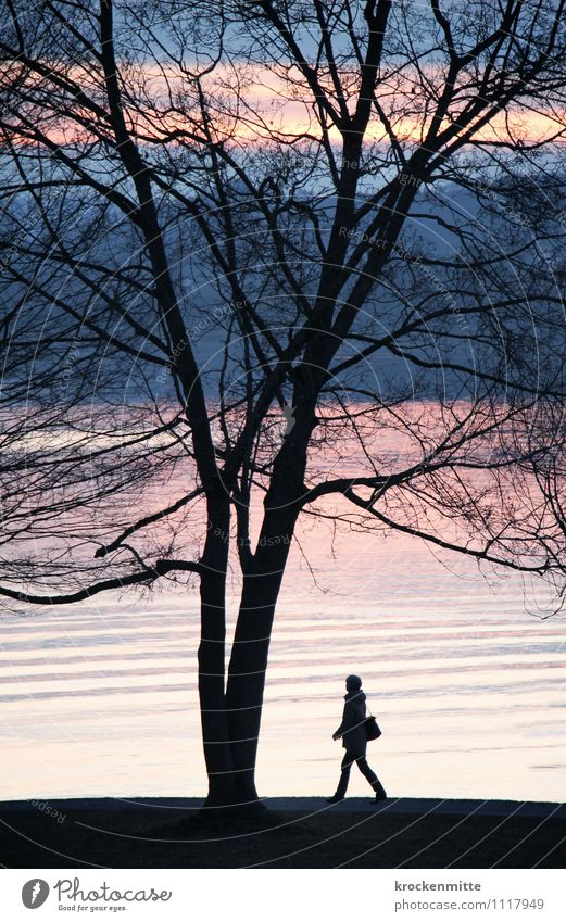 swell Calm Tree Lakeside Lake Constance Bag Walking Blue Pink Black Moody Beautiful To go for a walk Promenade Silhouette Branch Spring Waves Swell Romance