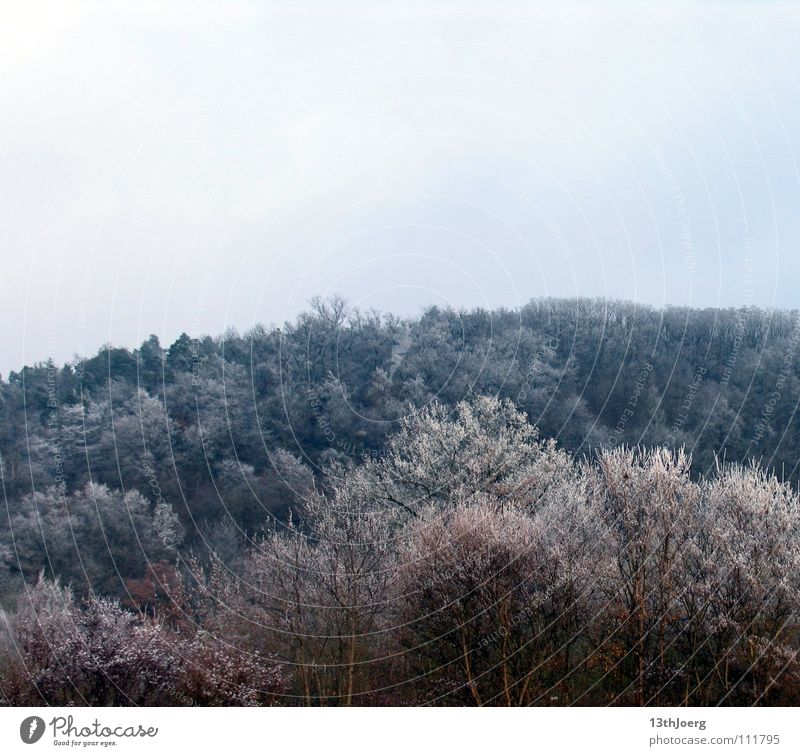 FrostWald Forest Tree Cold Freeze Winter Treetop Environment Colour Blue Structures and shapes Snow Nature Landscape