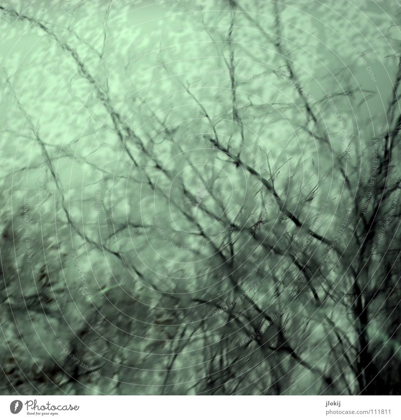 Water Sky Tree Blue Autumn Rain Weather Wet Network Bushes Branch Damp Twig Muddled Varnish Branchage