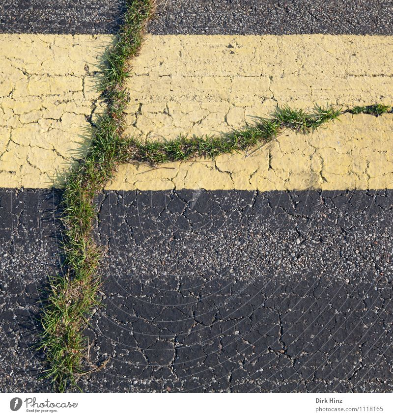 Life in the asphalt Environment Nature Plant Grass Street Lanes & trails Yellow Gray Green Resolve Success Hope Performance Optimism Planning Survive Change