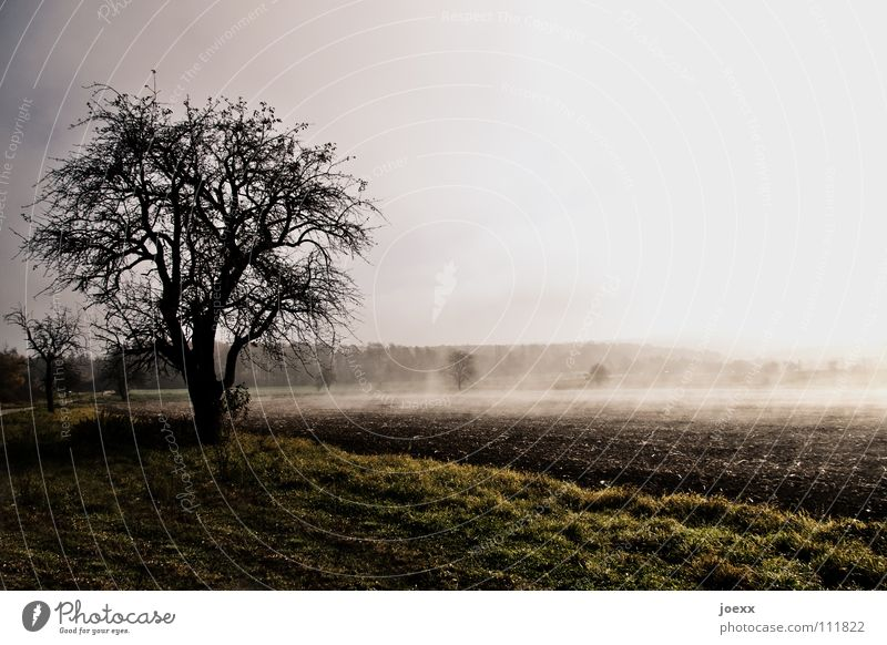 energy absorption Tree Ground fog Relaxation Autumn Idyll Morning Think Fog Wall of fog Unclear Poetic Romance Calm Solar Power Sunlight Sunbeam Moody Daydream