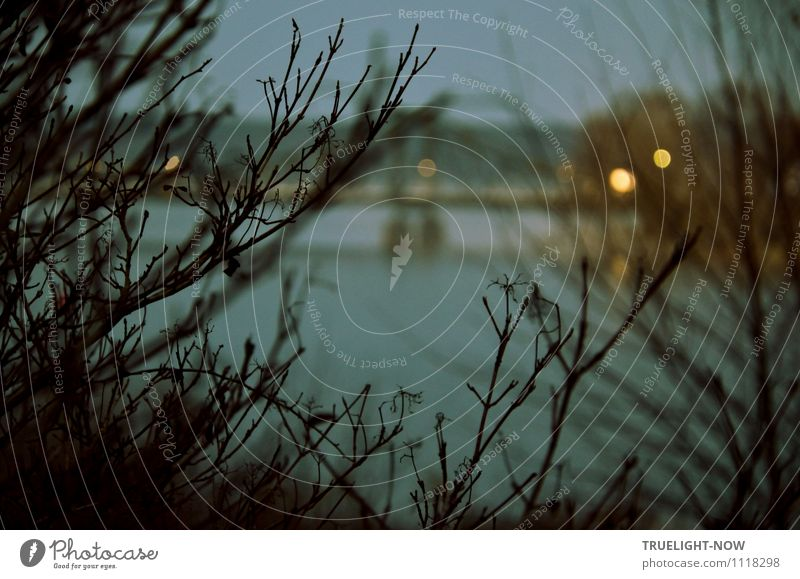 """Glienicker (agent) bridge Floodlight Technology Environment Nature Landscape Plant Air Water Sky Autumn Bushes Twigs and branches Park River bank """"Havel"""
