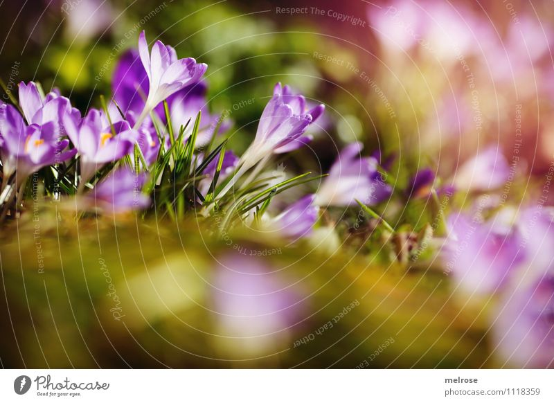 Nature Beautiful Green Relaxation Flower Leaf Meadow Spring Blossom Grass Style Pink Growth Illuminate Earth Elegant