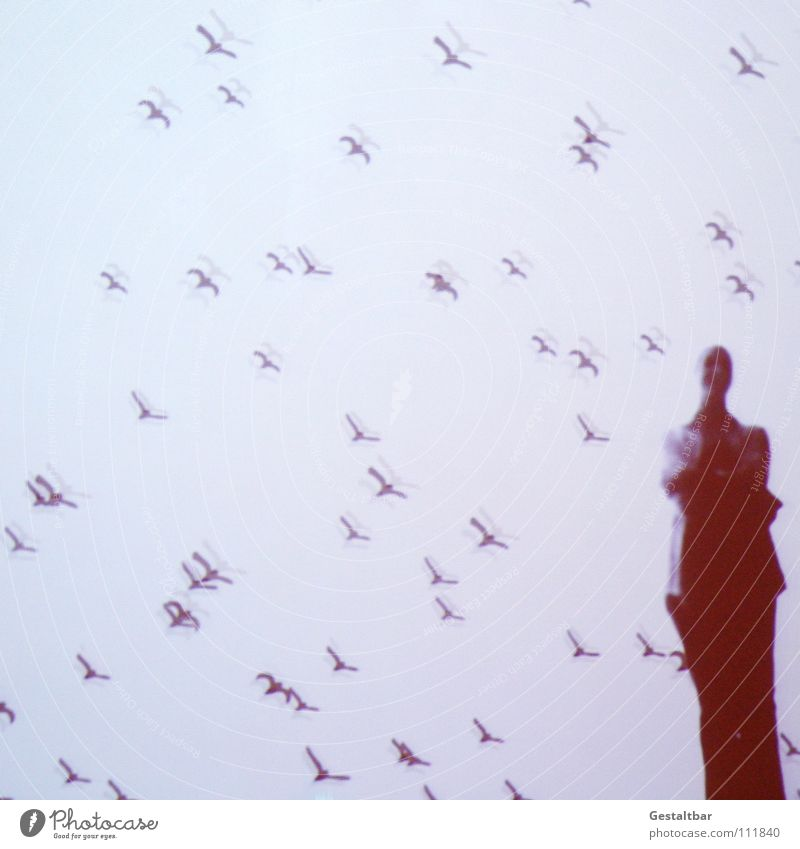 Human being Woman Joy Calm Movement Think Bird Flying Free Perspective Stand Mysterious Vantage point Exhibition Flock Projection screen