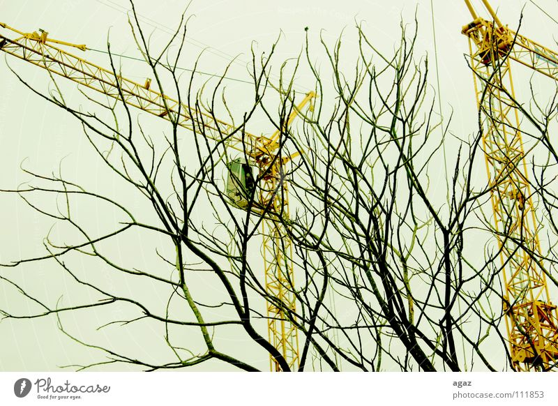 Branch Chaos Muddled Section of image Partially visible Branchage Crane Leafless Construction crane