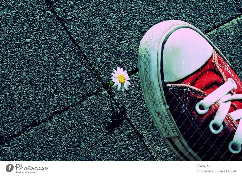 Nature Flower Footwear Chucks Daisy Sneakers Moral