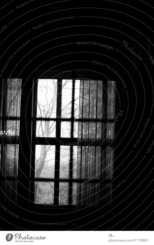 windows Living or residing Room Tree Wall (barrier) Wall (building) Window Drape Curtain Dark Creepy Wanderlust Loneliness Black & white photo Interior shot