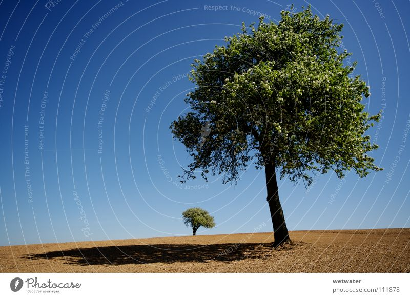 Desert trees Tree Green Loneliness Summer Spring Field Jump blue Sky lonely landscape Earth dirt dust