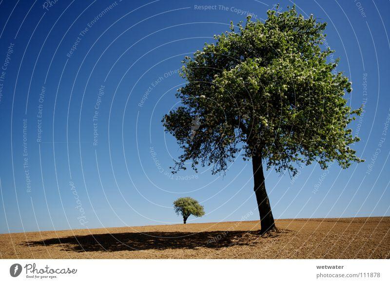 Sky Tree Green Blue Summer Loneliness Jump Spring Landscape Field Earth Desert