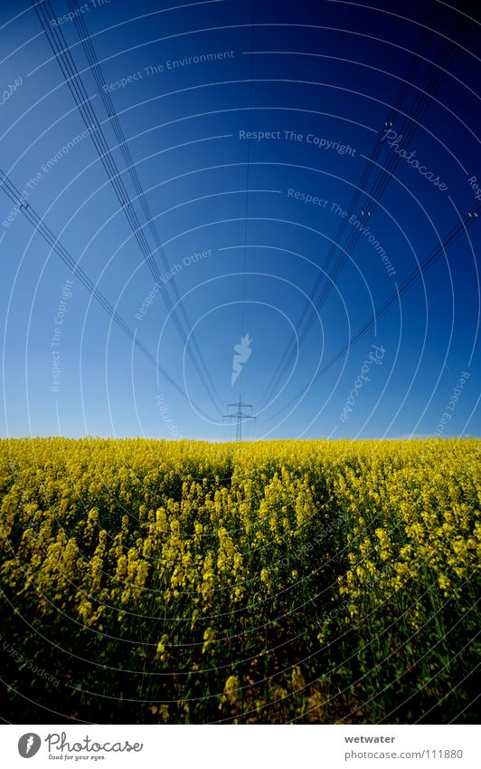 fields of gold Canola Field Sky Summer Jump Spring Power High voltage power line Wire Electricity Ecological Alternative Services Force blue powerplant