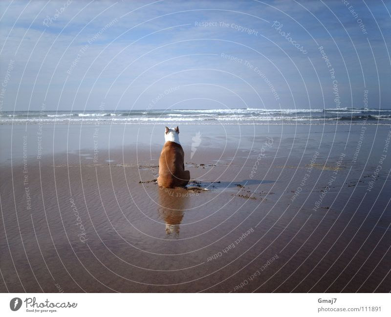 longing Longing Meditation Ocean Beach Dog Animal Grief Endurance Concentrate Mammal Wait Water Sand Patient imagination