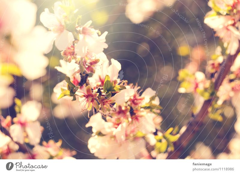 Nature Beautiful Green White Sun Warmth Meadow Spring Blossom Garden Brown Bright Pink Park Field Blossoming