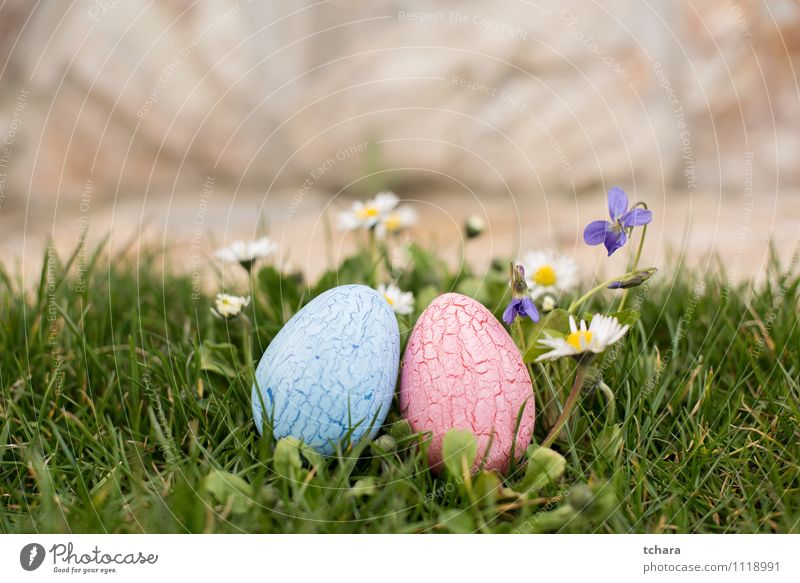 Easter eggs Garden Nature Spring Flower Blue Pink Religion and faith Tradition Egg painted decorated colorful two objects violet daisy hunting Easter holiday