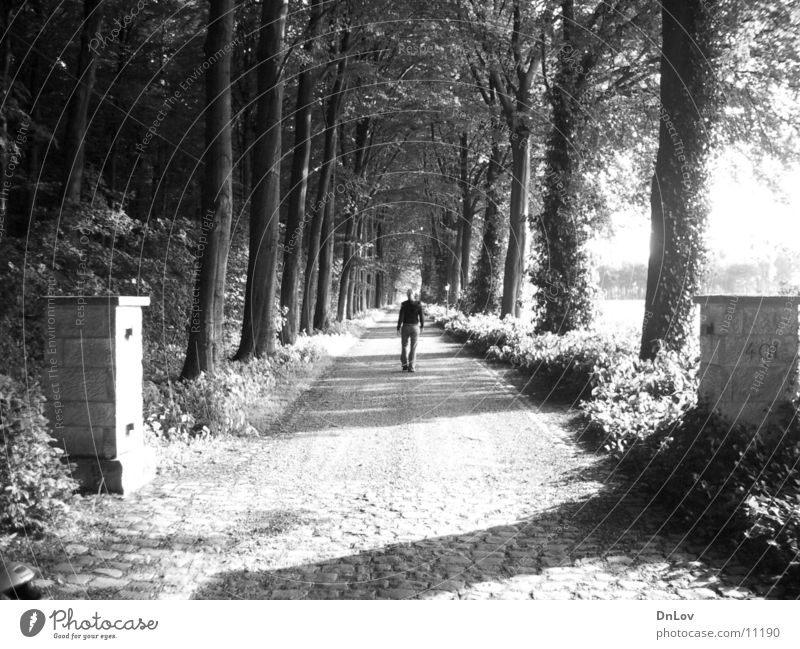 lonely Avenue Tree Woman Loneliness Human being Black & white photo