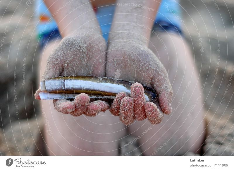 Ocean Hand Sand Moody Fish Mussel