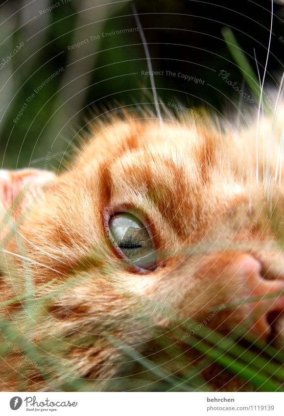 Cat Nature Beautiful Calm Eyes Grass Happy Exceptional Garden Orange Observe Cute Warm-heartedness Cool (slang) Nose Pelt