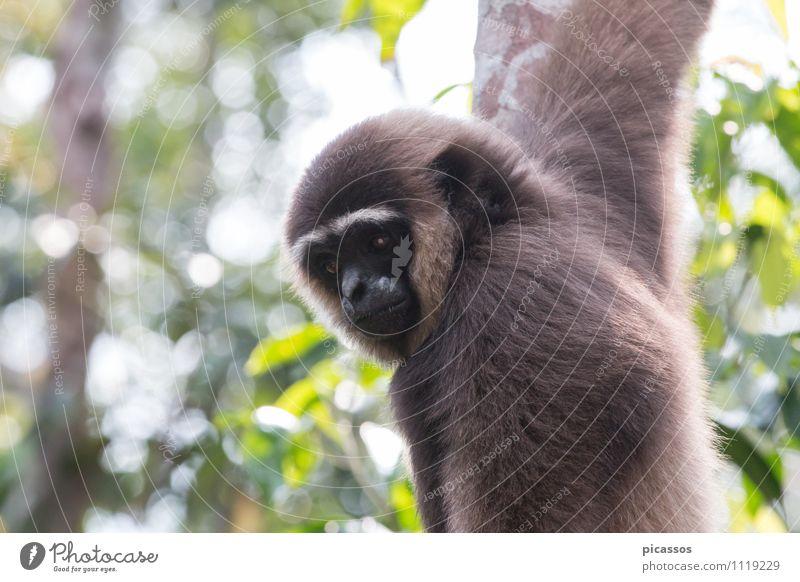 Vacation & Travel Animal Wild animal Adventure Exotic Expedition
