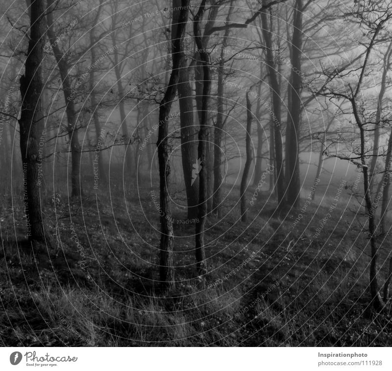 pass Black Forest Tree Leaf Autumn Fog Black & white photo wise Lanes & trails