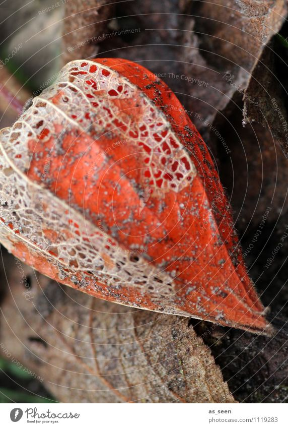 Nature Old Plant Colour Leaf Environment Sadness Autumn Senior citizen Blossom Natural Death Garden Brown Orange Dirty