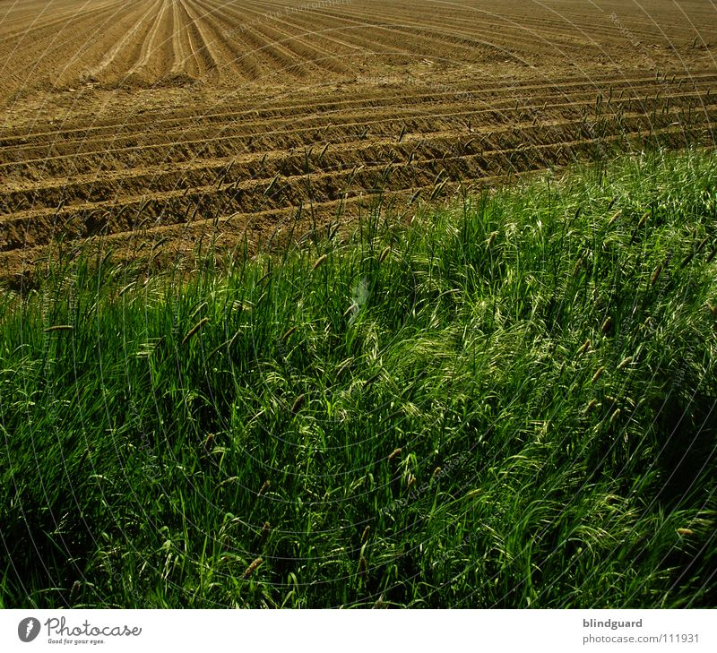 Agrarökonoms Playground Plow Work and employment Subsidy Grass Agriculture Field Border Green Brown Manure Groundwater 2 Two-tone Autumn Indian Summer