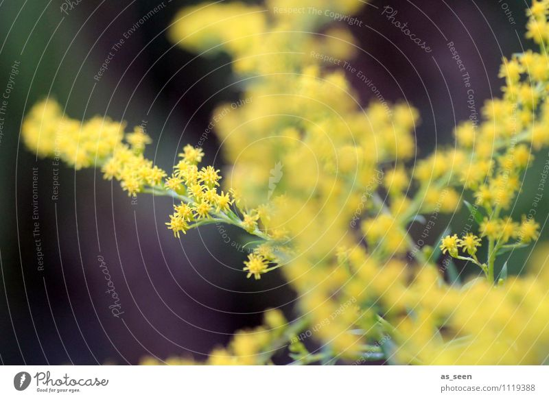 Nature Plant Beautiful Colour Summer Joy Yellow Life Autumn Spring Blossom Natural Healthy Gray Garden Brown